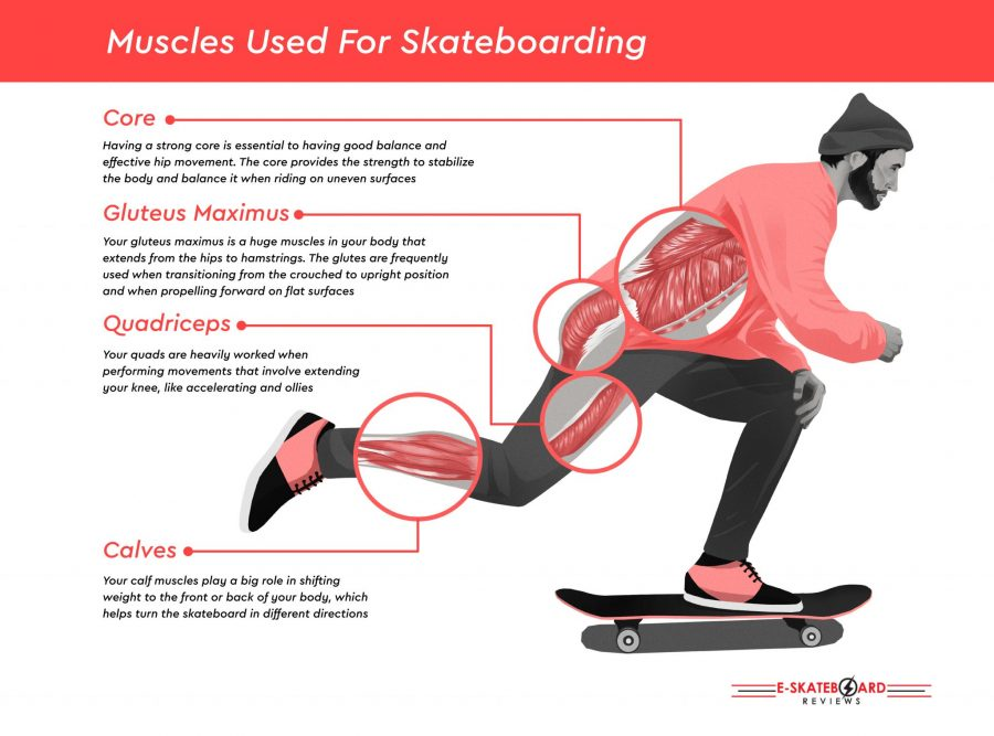muscles used skateboarding infographic